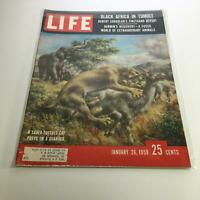 Life Magazine: Jan 26, 1959 - A Saber-toothed Cat Preys On A Guanaco