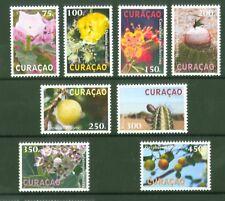 Curacao 2012 - Pflanzen Blumen Blüten Früchte Kakteen Kaktus Opuntien Nr. 111-18