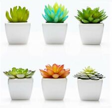 Pack 6 Mini Fake Succulents Artificial Plants - Ceramic White Potted Home Office