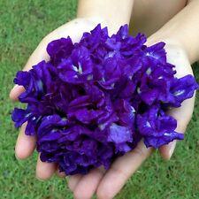 BฺEST 50 SEEDS OF BLUE BUTTERFLY PEA SEEDS CLITORIA TERNATEA VINE FLOWER OGANIC