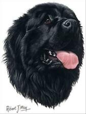 Newfoundland Dog Robert May Art Greeting Card Set of 6