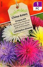 3pks China Asters LARGE Flower Seeds/Unique Mix/For beds borders cutting 2018 UK