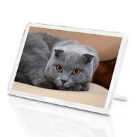 Scottish Fold Cat Classic Fridge Magnet - Orange Eyes Kitten Pet Gift #12677