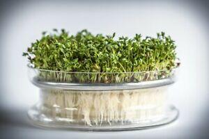 Keimschale für Sprossen mit Metallsieb Glas Kressesieb Samen Schale