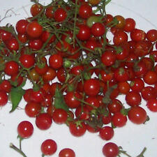 Currant Tomato - SOLANUM Pimpinellifolium - 10 seeds - Vegetables/ Fruits
