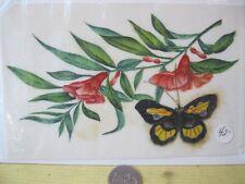 Vintage Print,BUTTERFLIES,Hand Painted,Maria Haliburton,p4041
