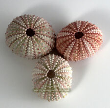3 X Sea URCHINS Pink 3.5 to 5 Cm. for Crafts and Air Plants or Terrarium