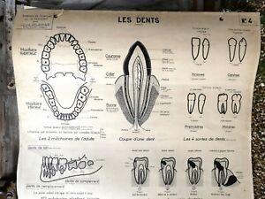 Objet Métier Vintage Ecole Carte Scolaire à œillets DELAGRAVE Ap Digestion Dents