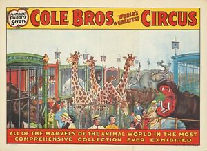 Original Vintage Affiche Cole Bros Cirque Tout De The Marvels Girafes Train