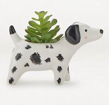 Black & White Mono Dalmation Dog Planter Pot With Artificial Succulent Plant