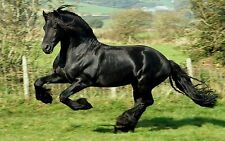 """BLACK HORSE Mini Poster 24""""x 36"""""""