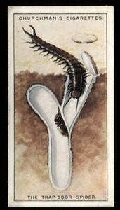 Tobacco Card, Churchman, NATURES ARCHITECTS, 1930, Trap Door Spider, #23