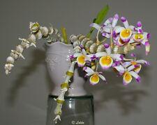 Dendrobium pendulum orchid XL size plants