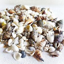 Muschelmix small 1kg Deko Maritim Muschel Dekoration Bastel Muscheln Dekomuschel