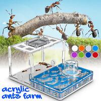 Acrylic Ant Nest Ant Food Feeding Area Ants Live Housing Farm Formicarium Kids