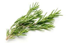 Whole ROSEMARY Leaf Organic FREE SHIP