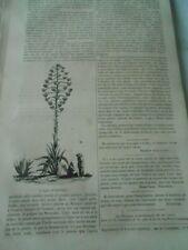 Plante Agave d'Amérique Agave Americana Gravure Old Print 1833
