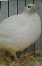 12 uova da cova di ingrasso francesi del colore marrone contro llo