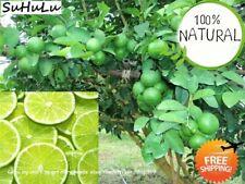 30pcs Rare Kaffir Lime Seeds Tree Garden Plants Lemon Garden Pl Top Bonsai E9J3