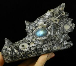 "5.3"" CRINOID FOSSIL  Carved Crystal Dragon Skull & Labradorite Eyes"