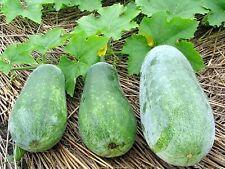 20 seed hairy gourd mokwa mao gua qua China Wax Gourd Vegetable seed D163
