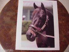 Seattle Slew Horse Racing 8 X 10 Original Photo-1977