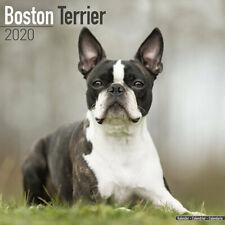 Calendrier 2020 - BOSTON TERRIER