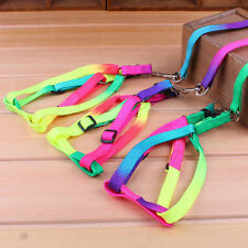 Rainbow Coloured Adjustable Harness and Lead for your Small Doggy