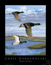 NEW Mallard Ducks 16x20 Art Print Poster by Dobrowolski