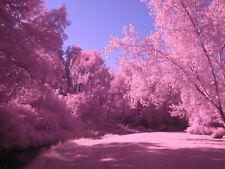 Canon EOS M100 Full Spectrum infrared UV/VIS/IR/Astro converted camera