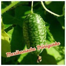 Mexikanische Minigurke- Melothria Scraba Samen- 10 Samen