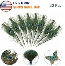 "20PCS 10-12"" Beautiful Natural Peacock Tail Eyes Feathers DIY Craft Decoration"