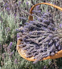 300+ Dried Lavender Flowers and Stems- from Sunny California