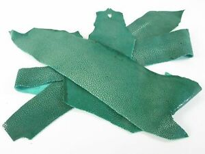 PELGIO Genuine Polished Stingray Skin Leather Hide Pelt Scraps 100 gram Green