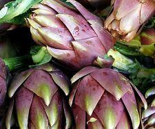 ☺12 graines d artichaut violet de provence