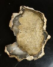 Petrified Wood From Madagascar (124gm)