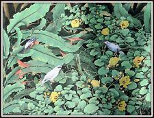 """Original Balinese Painting   ""Jungle Friends""  FINE DETAIL  (46.5""W x 35""H)"