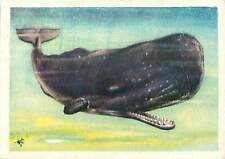 OLD CARD IMAGE : Grand cachalot Physeter macrocephalus Sperm whale