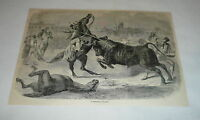 1878 magazine engraving ~ A TERRIBLE CHARGE Bullfighting, Spain