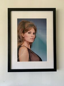 Hollywood Regency - Raquel Welch - Studio 1960's Colour Photo - Matted & Framed