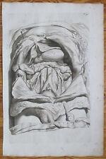 Cowper Bidloo Huge Impressive Engraving Anatomy Trunk Abdomen Plate 41  - 1737