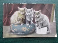 VINTAGE CAT POSTCARD - PUTTING THEIR HEADS TOGETHER - CATS KITTENS