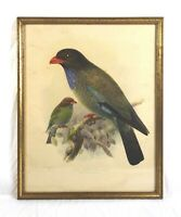 Vintage J. G. Keulemans Indian Broad-Billed Roller Bird Framed Lithograph Print