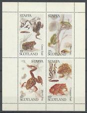 (039981) Frog, Amphibians, Staffa