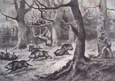 Wild boars and the hunter.....wood engraving...1860s
