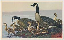 Canada Goose - National Wildlife Federation Wild Bird Postcard 1939