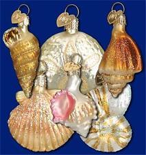 BOX OF 6 ASSTD MINI SEA SHELL OLD WORLD CHRISTMAS GLASS NAUTICAL ORNAMENTS 14016