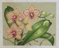 NEEDLEPOINT Handpainted Labors of Love ORCHIDS