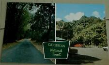 Vintage Color Photo Postcard, Caribbean National Forest, VGC
