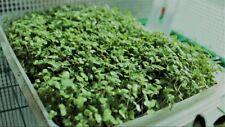 Microgreen, Broccoli Waltham 29 1 oz Heirloom, Non-Gmo Seed Free Shipping